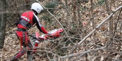 disperso nel bosco